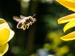 Pollinator Protection Policies