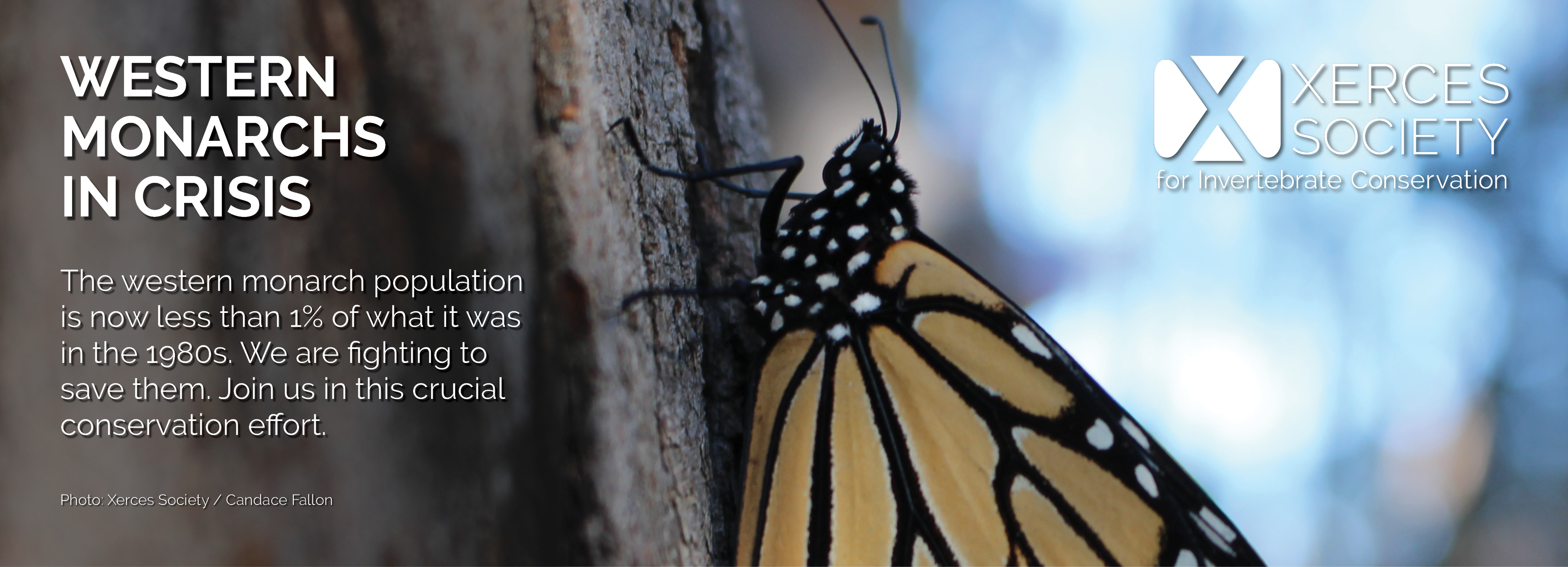 This banner, featuring a monarch clutching a tree trunk in a dimly-lit scene, says: Western Monarchs in Crisis: The western monarch population is now less than 1% of what it was in the 1980s. We are fighting to save them. Join us in this crucial conservation effort.