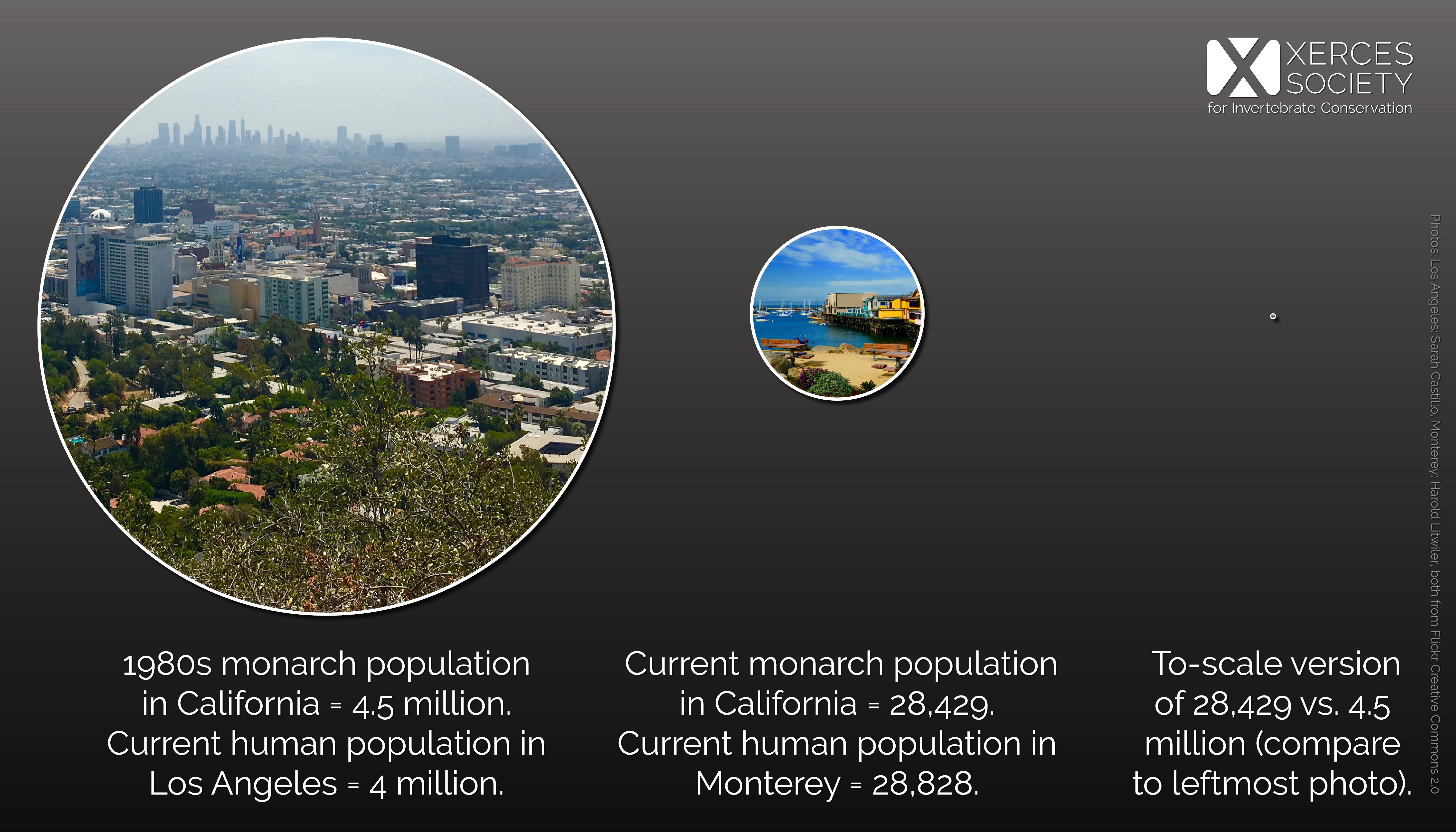 A graphic shows the relative size of Los Angeles' human population compared to Monterey's, and points out that the decline from the western monarch population's historic levels to today's overwintering population is of a comparable magnitude.