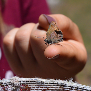 A small butterfly with brown, orange, and maroon streaked markings is held aloft on a person's finger. The hand has purple nail polish. The edge of a white net is shown along the bottom of the frame.