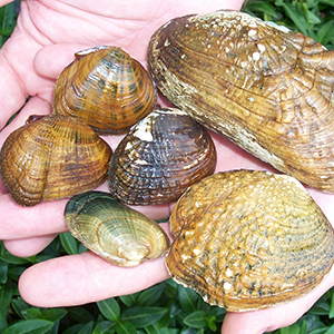 A wide variety of shells, in different shapes, sizes, and colors, are held in a person's two hands.