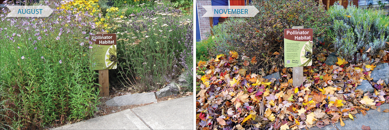 This graphic show two scenes from the same garden in different seasons. During summer, the yard of full of flowers. In winter, the bloom has gone but there are fallen leaves and uncut stems to provide shelter for insects