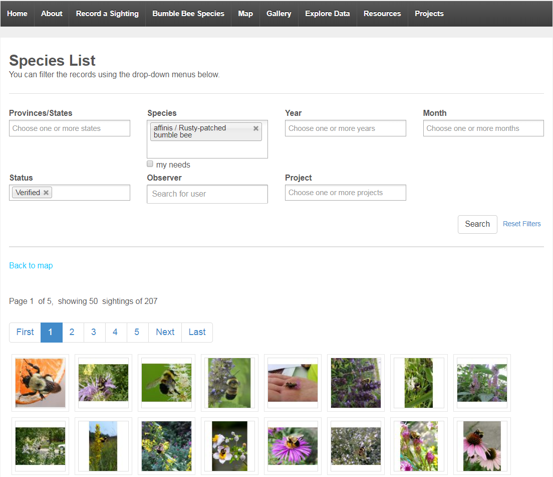 This screen shot of the Bumble Bee Watch interface includes search fields and images from bumble bee sightings.