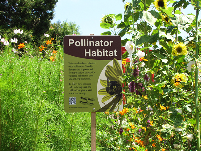 A Xerces Society pollinator habitat sign stands proudly in a lush garden.