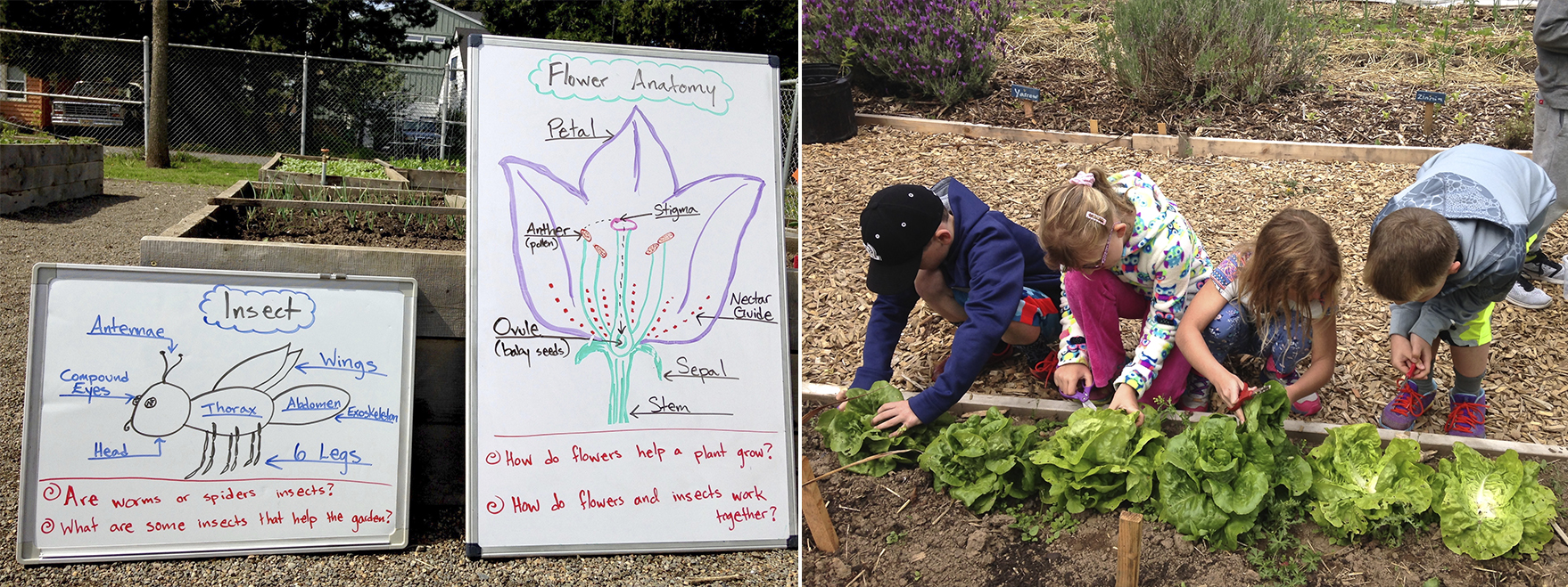 At left, hand-drawn diagrams detail insect and flower anatomy. At right, children tend plantings in a raised bed.