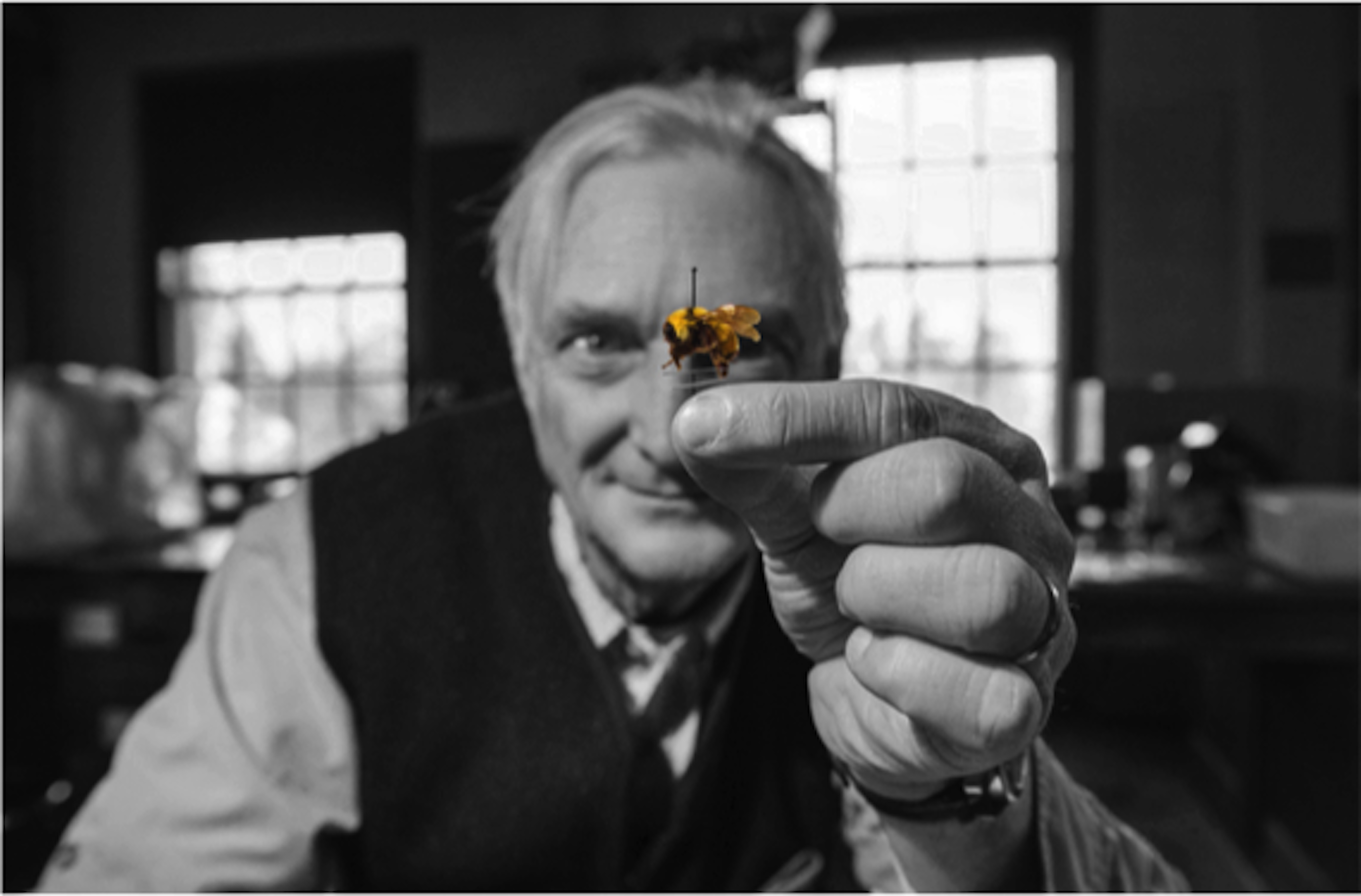 An artistic shot that is in black and white except for the bee, shows a man holding a small bee specimen, which is on a pin.