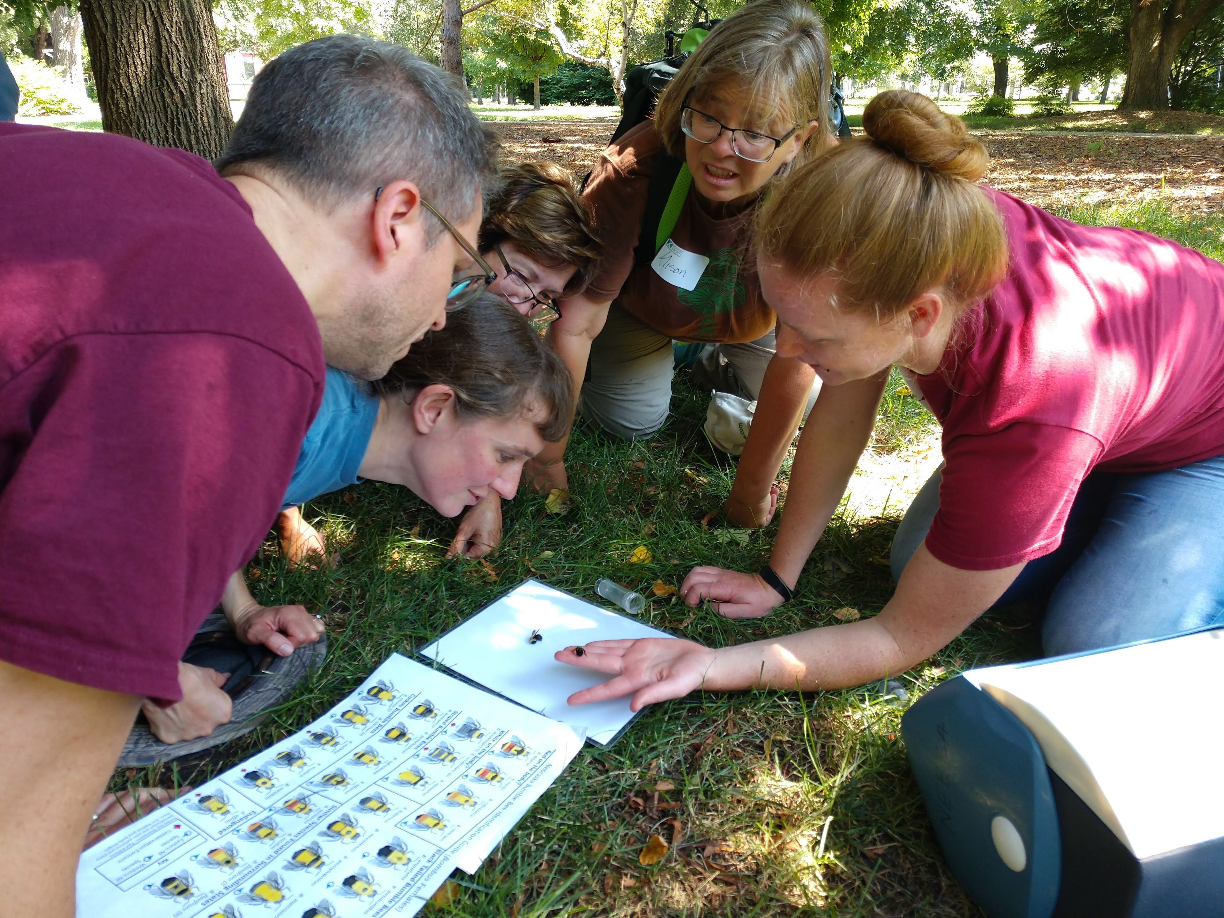 A group of people seated on the grass lean in to look at a small plastic vial on the ground, next to a sheet of diagrams for bee identification.