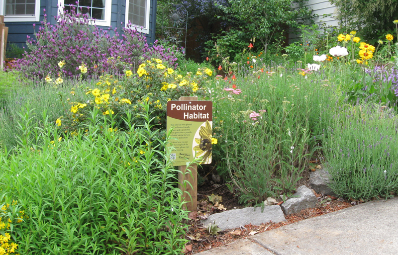 A Xerces Society pollinator habitat sign stands in a front-yard pollinator garden