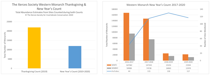 "Two graphs are shown. The graph on the left (Figure 1) has two columns. The leftmost column (yellow) is labeled ""Thanksgiving Count (2019)"" and shows an amount of approximately 22,000. The right column in Figure 1 (blue) is labeled ""New Year's Count (2019-2020)"" and shows an amount of approximately 12,000. Figure 2 (on the right) shows the last four years of Thanksgiving and New Year's Counts, in which each New Year's Count has recorded a smaller number of monarchs, indicating monarch declines as the winter progresses. The other trend of note in this graph is the dramatic drop in the total population between the winter of 2017-2018 and the winter of 2018-2019."
