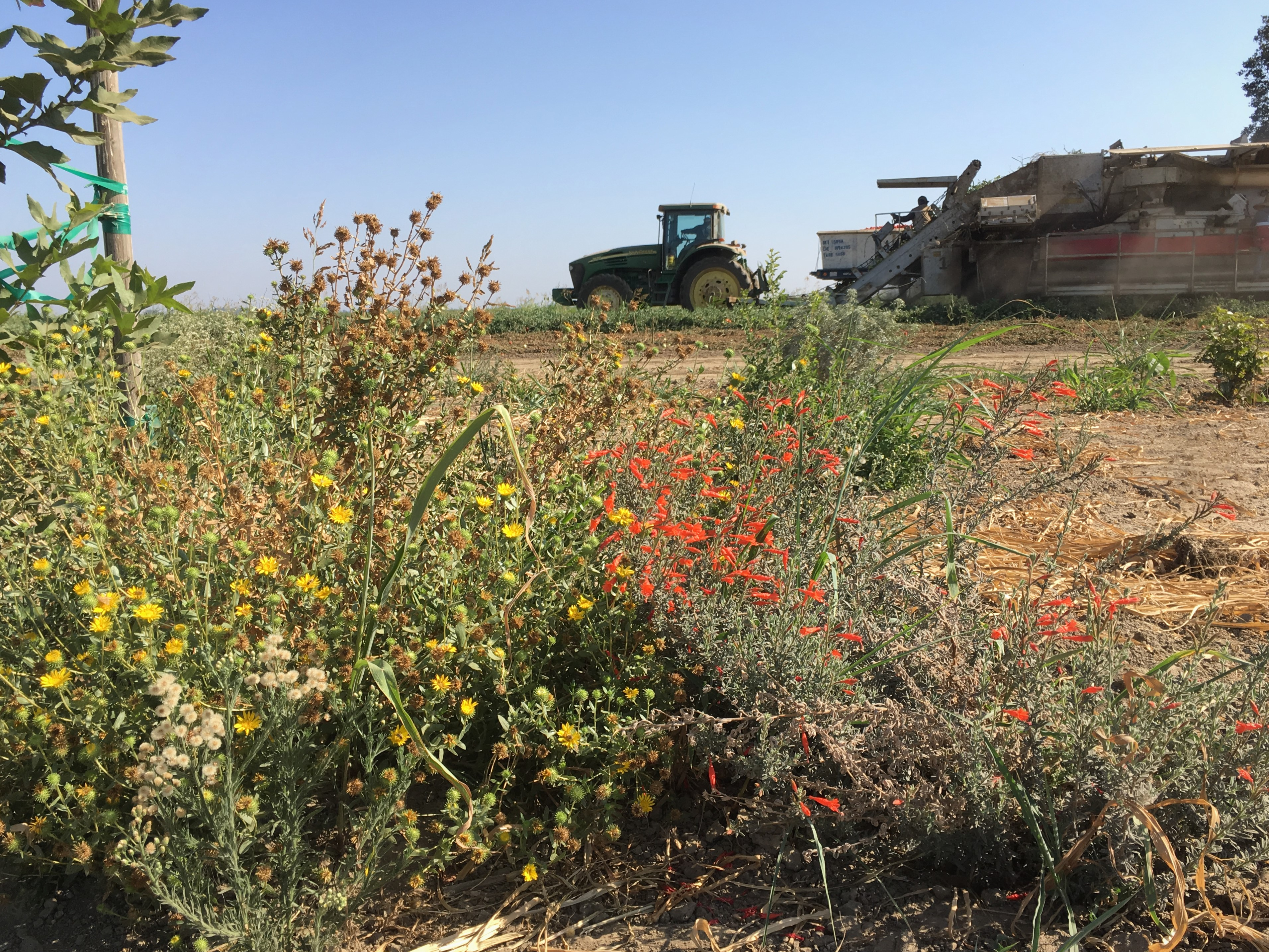 A brown, arid landscape is colored by a hedgerow with a diversity of flowers, including some vibrant red blooms. Behind the hedgerow is a tractor and some other large farming equipment.