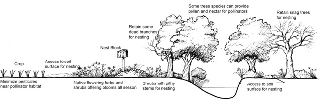 agroforestry notes no 34 illustration