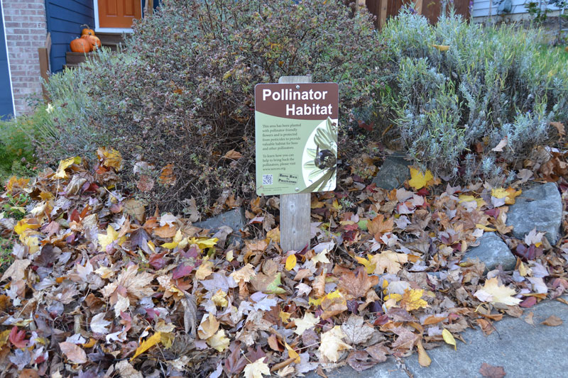 A picturesque front yard with jack-o-lanterns on the porch has colorful fall leaves on the ground, below an assortment of pollinator plants. A Xerces Society pollinator habitat sign stands proudly in the foreground.