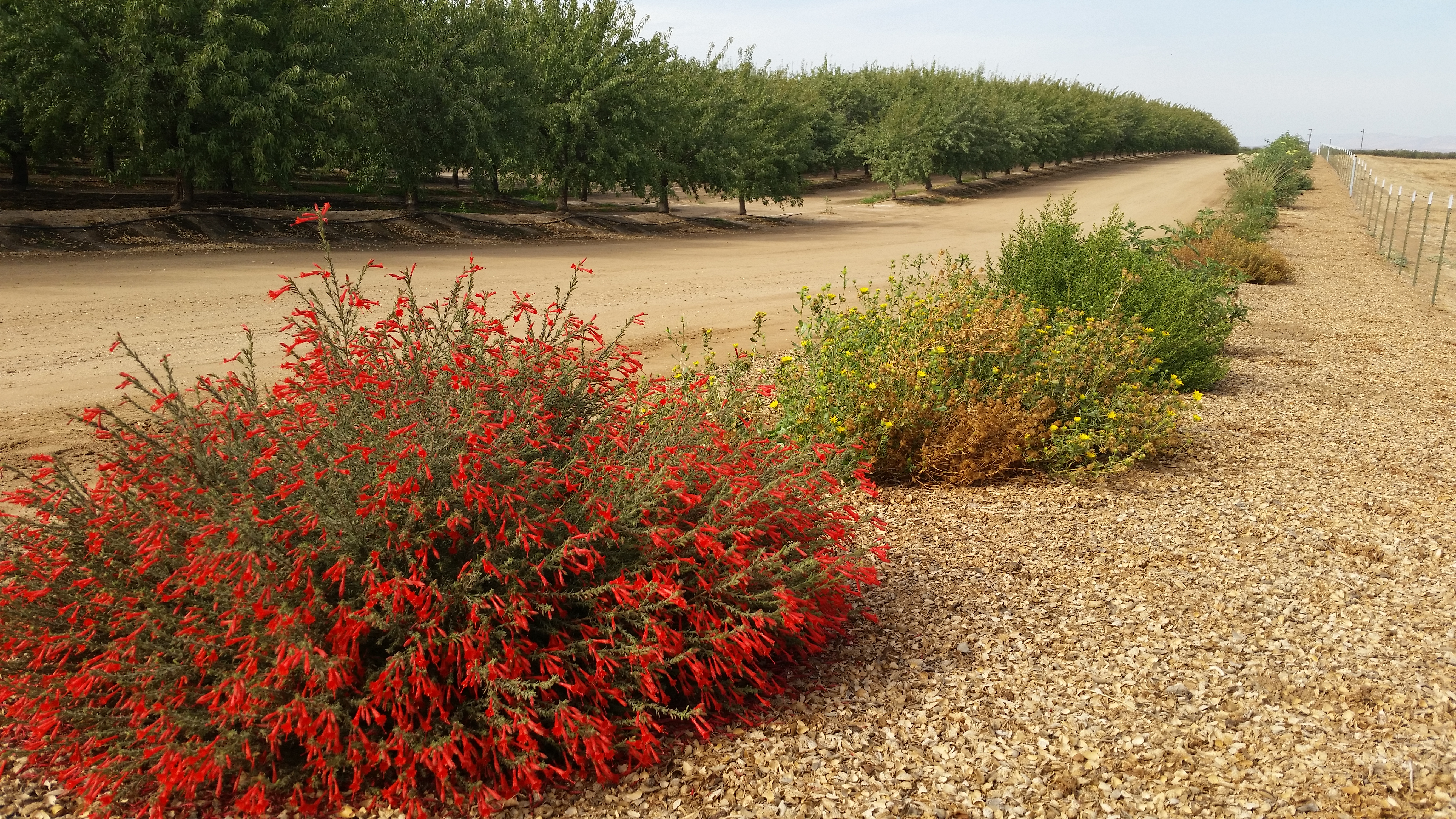 A line of colorful, flowering plants, including a bush with red blossoms in the foreground, recedes into the distance. Parallel to this line are rows of trees in an orchard.