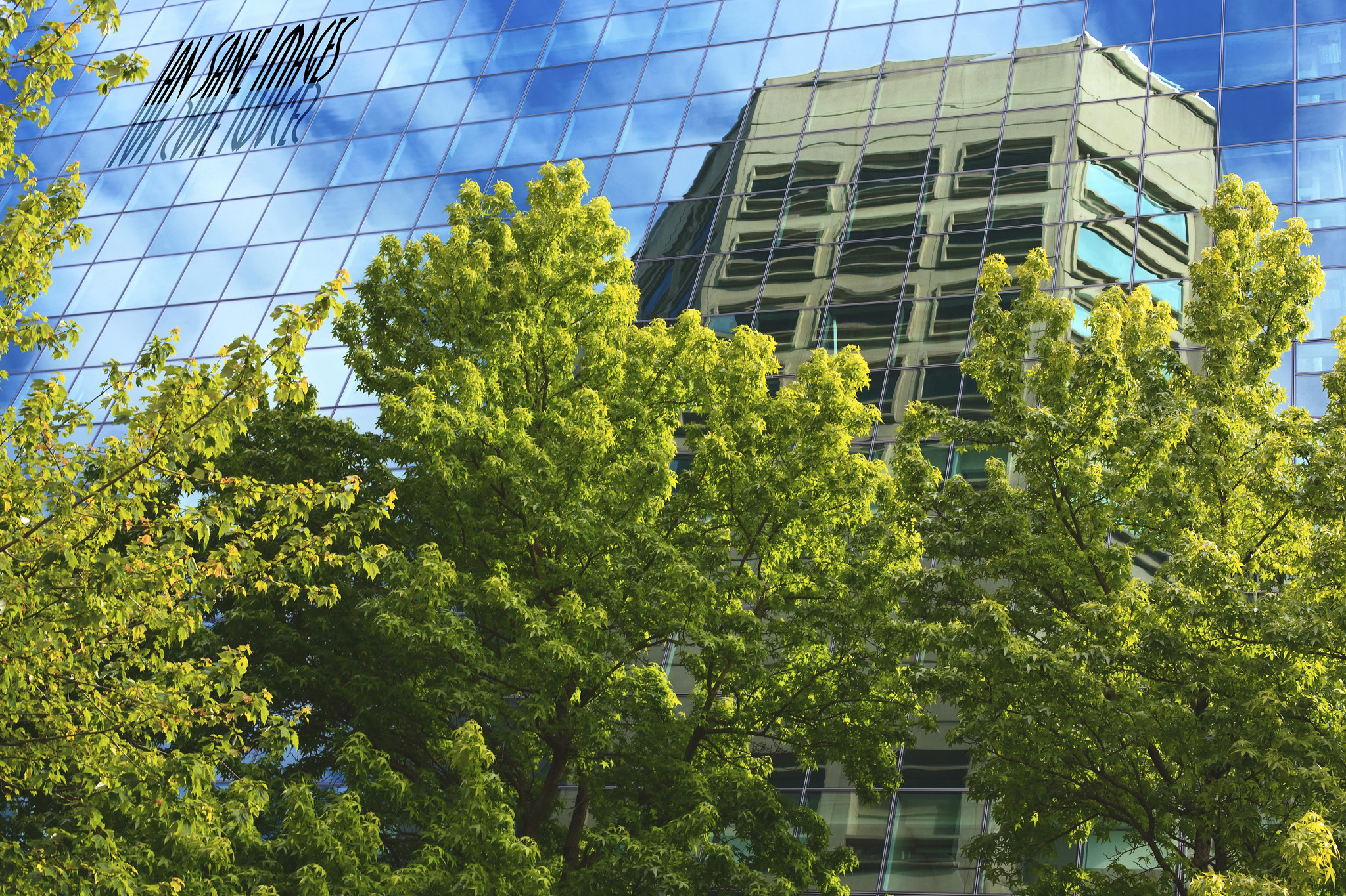 Bright green trees grow alongside a building with many mirrored windows, which are reflecting a blue sky with white, puffy clouds.