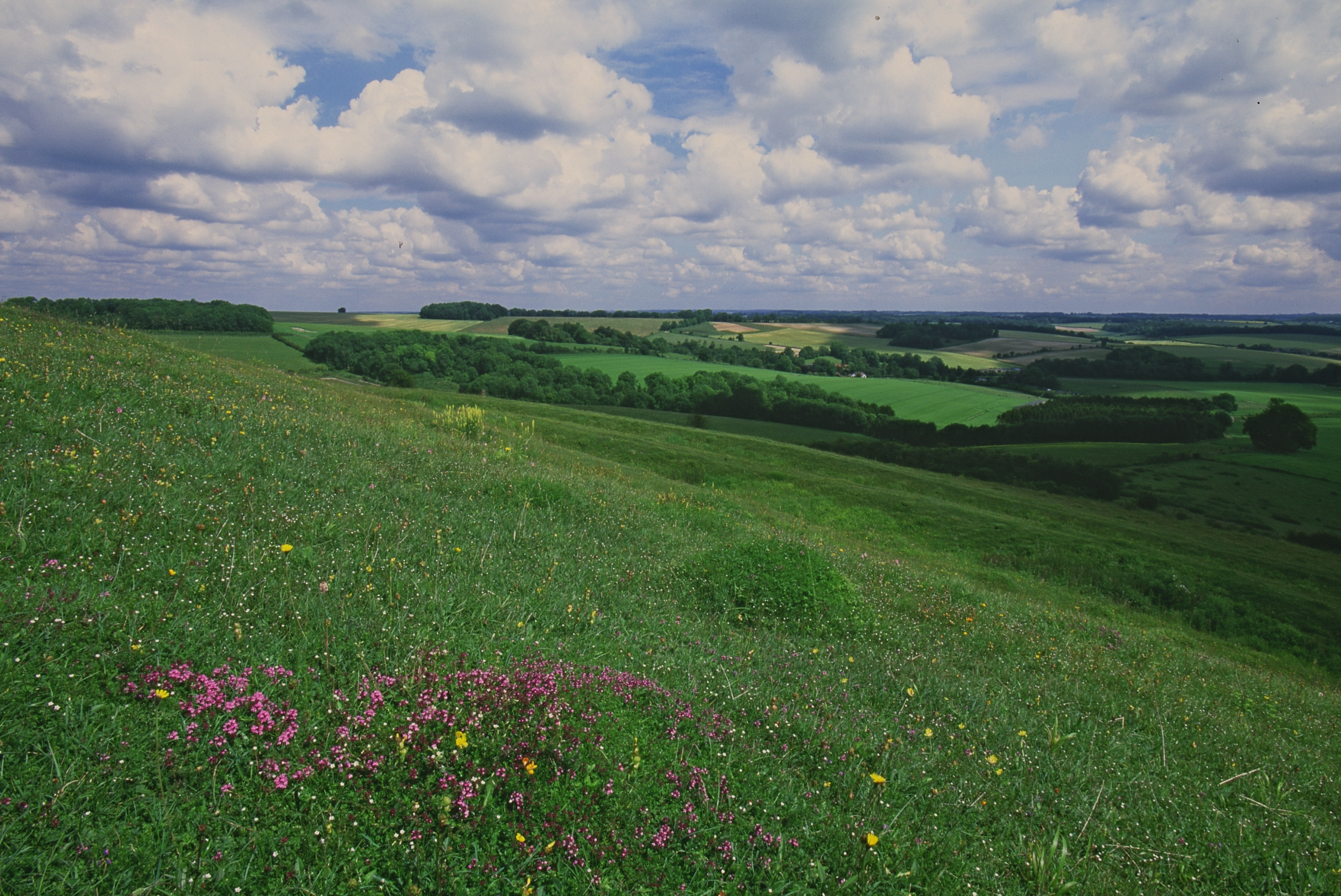 Rolling, green hills with wildflowers extend into the distance.
