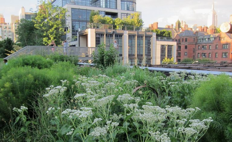 A garden bursting with native plants blooms in an urban environment.