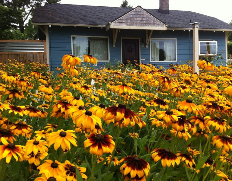 A mass of yellow coneflowers fill the front garden of this house. The color contrasts with the blue walls.