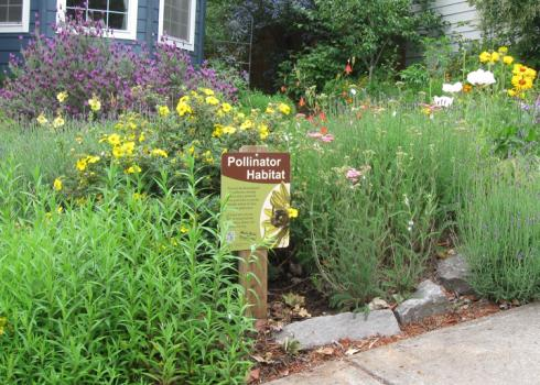 pollinator garden with a pollinator habitat sign