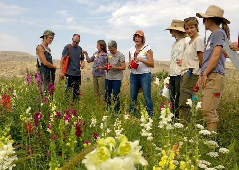 A group of people gather around a patch of blooming pollinator plants.