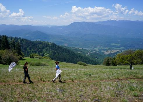 Amid a mountainous, meadow-strewn landscape, three people holding butterfly nets walk along a narrow, dirt trail.