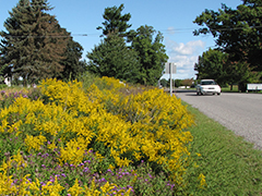 Managing Roadsides for Pollinators