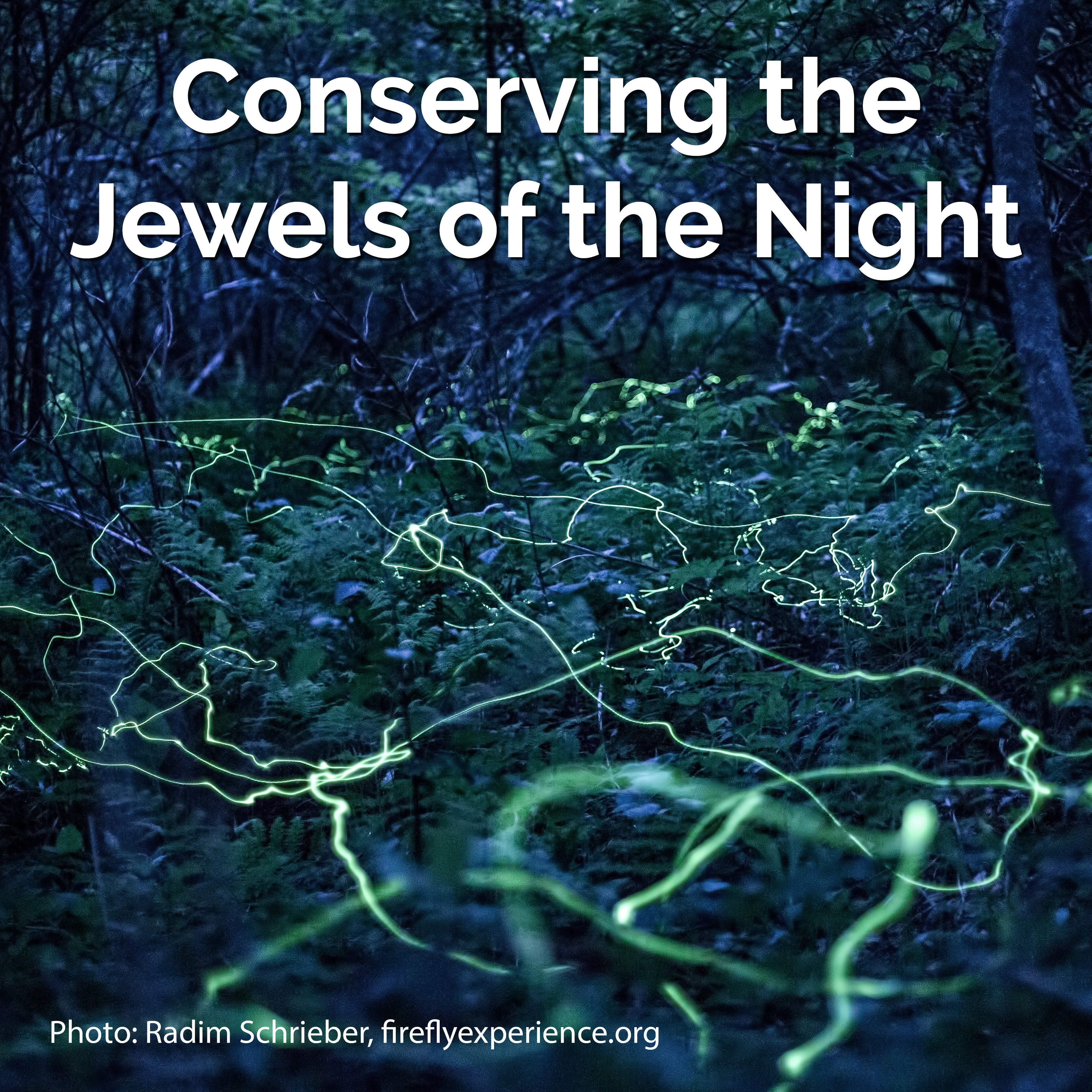 Meandering yellow-green streaks weave through a darkening forest with a thick understory of ferns, in this long-exposure shot of fireflies. Overlayed on this photo is white text that says