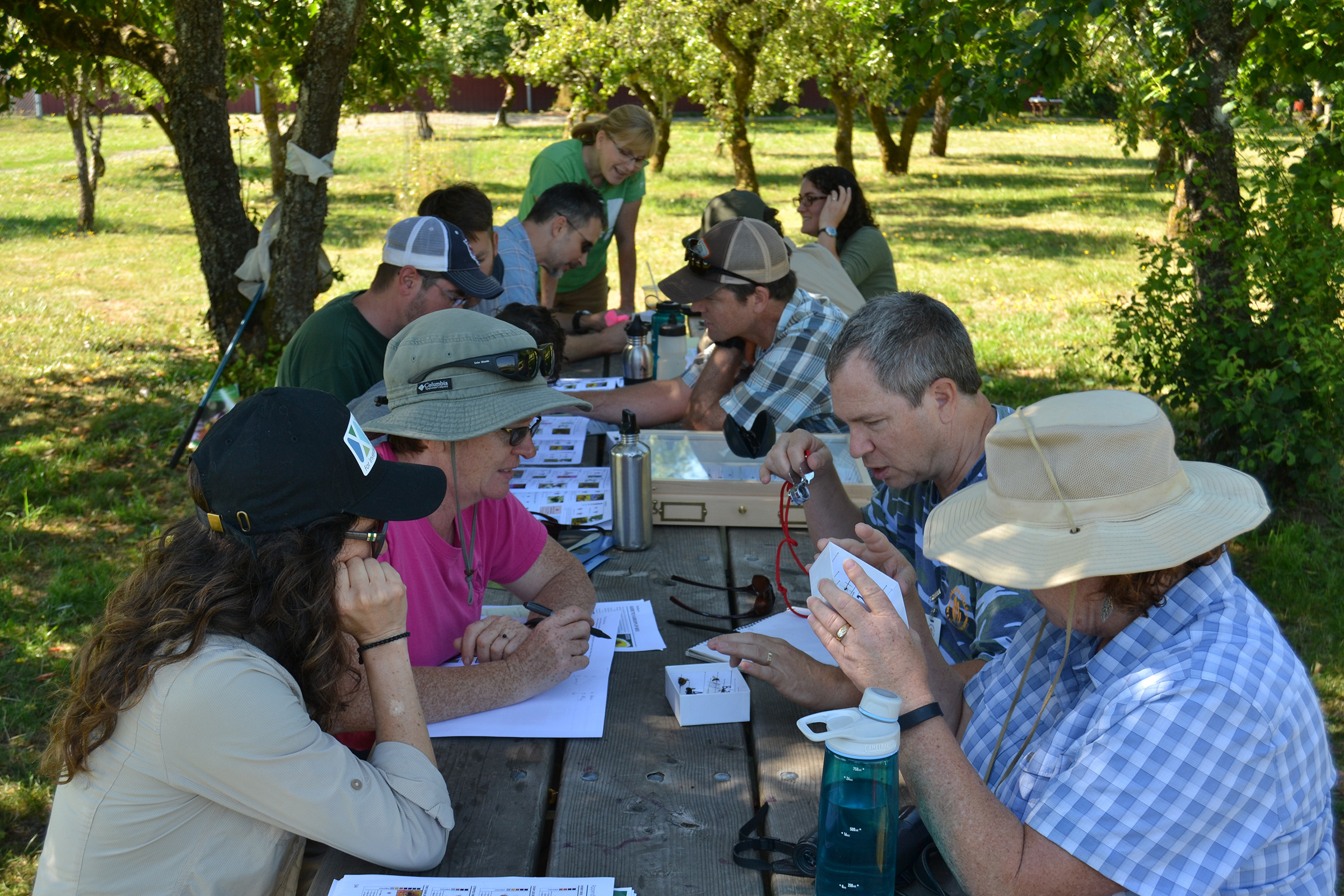 In the dappled shade of an old orchard, a group of people sit round a table looking at and actively discussing native bee specimens