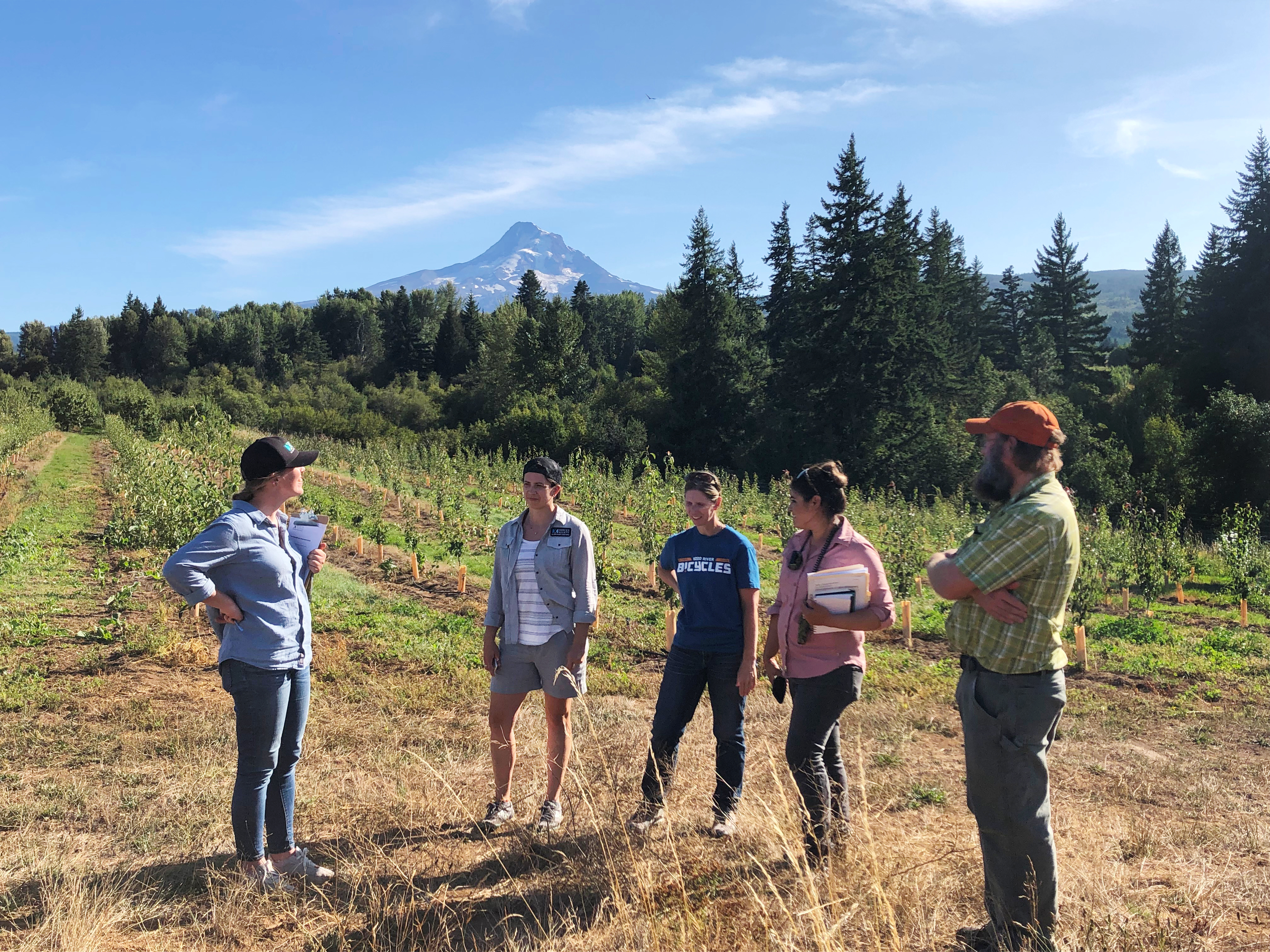 On a sunny day with blue sky, five people stand talking together in the foreground of a beautiful landscape. Behind them is a pear orchard, and beyond is the snow-covered, triangular form of Mt. Hood.