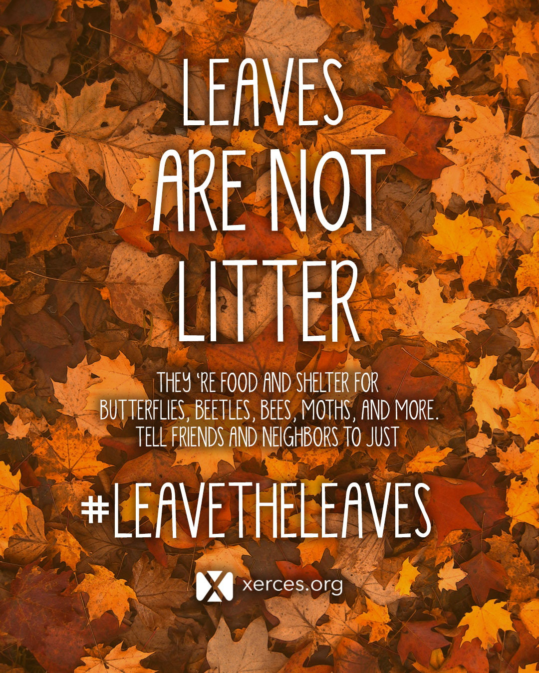 "A graphic with a bright background of orange and red leaves has white text that says ""Leave Are Not Litter"" in large letters. In smaller writing, it says, ""They're food and shelter for butterflies, beetles, bees, moths, and more. Tell neighbors and friends to just #leavetheleaves."" Then there is a small white Xerces Society logo."