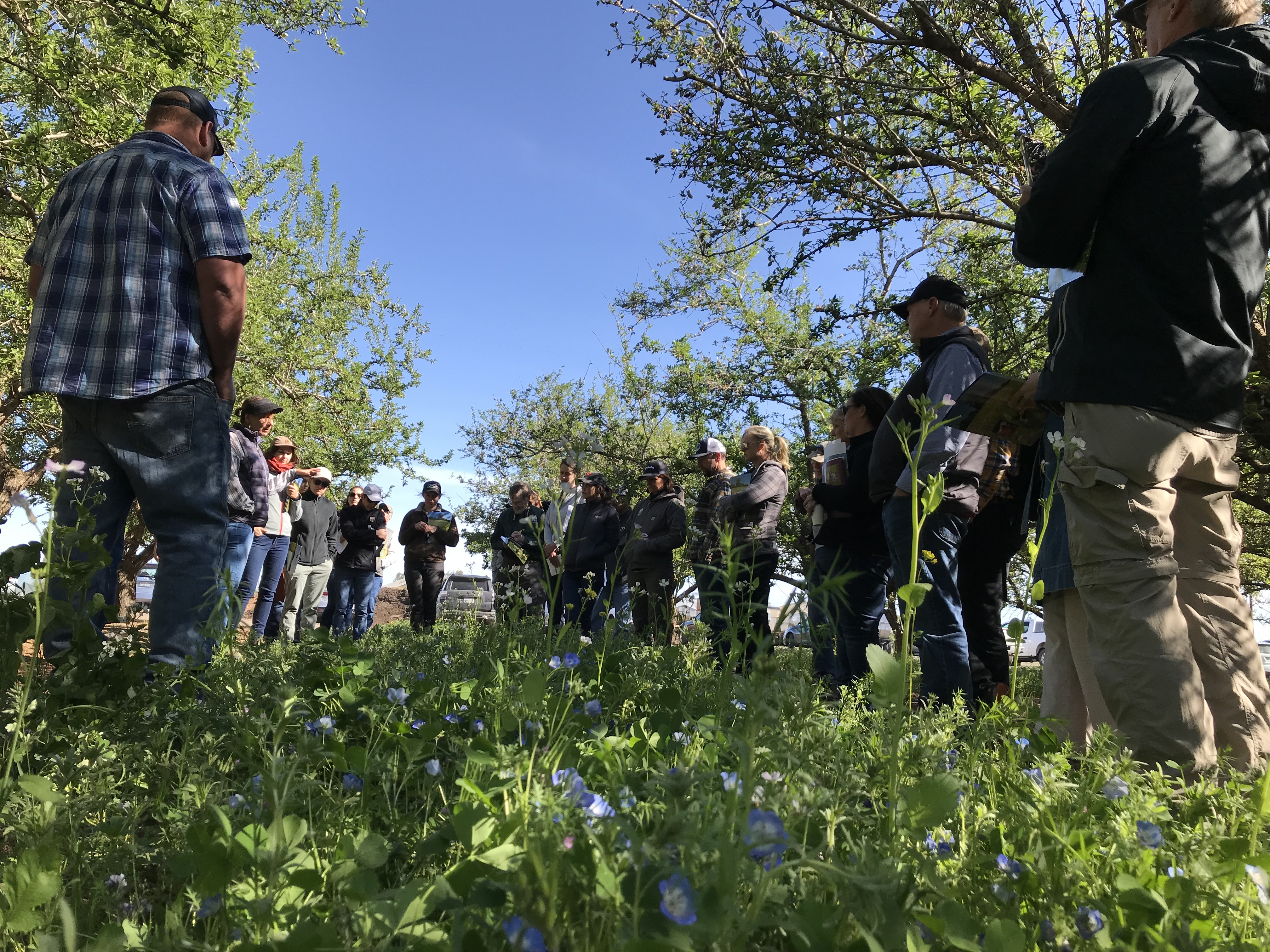 A group of people listen to a woman standing in the middle, presenting. They are in an orchard with flowering cover crops.