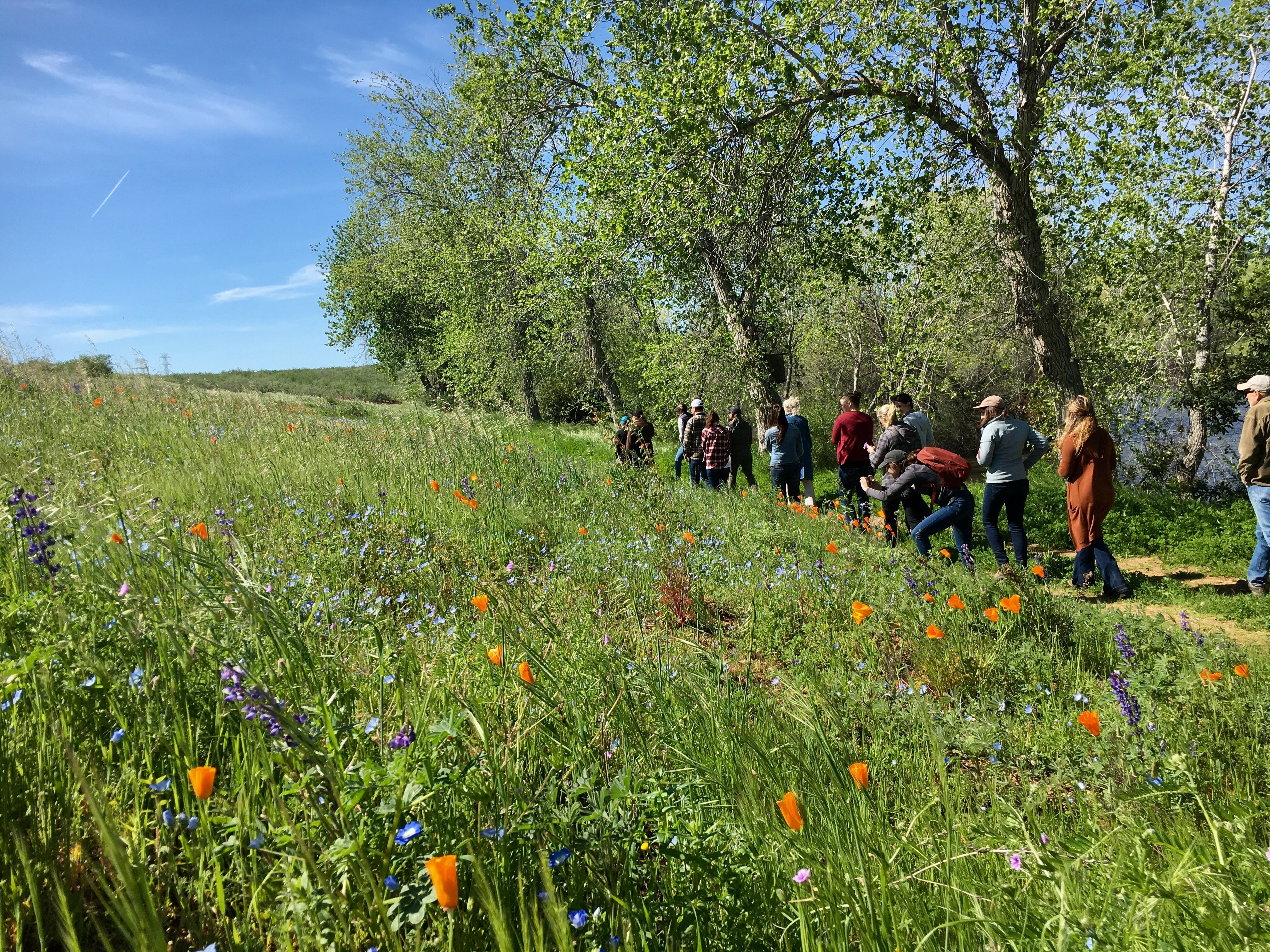 Xerces staff and almond growers walking in a line through pollinator meadow with orange and purple flowers.