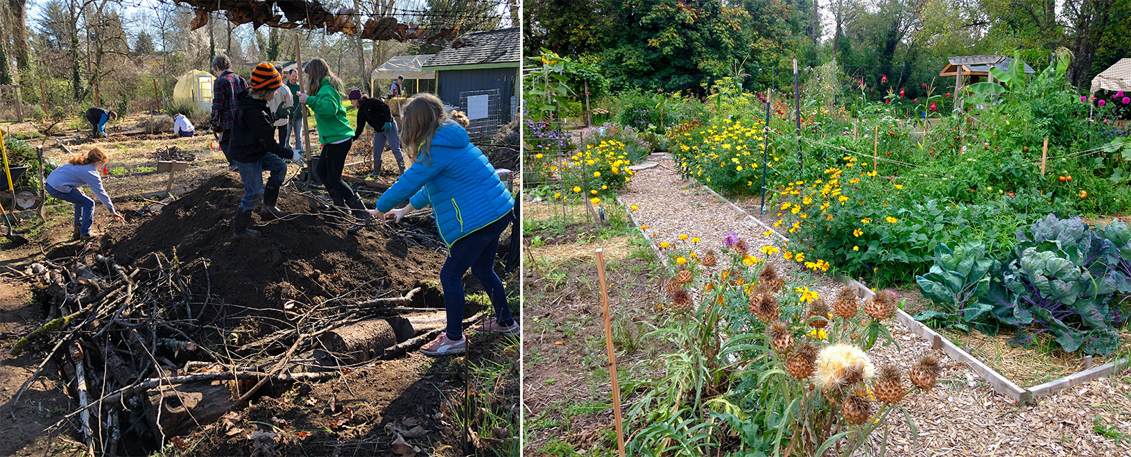 On the left, students stand atop mounds of earth and branches, as they compact them. On the right, the garden after the mounds were finished, with a gently-rolling surface covered in flower beds with colorful blooms.