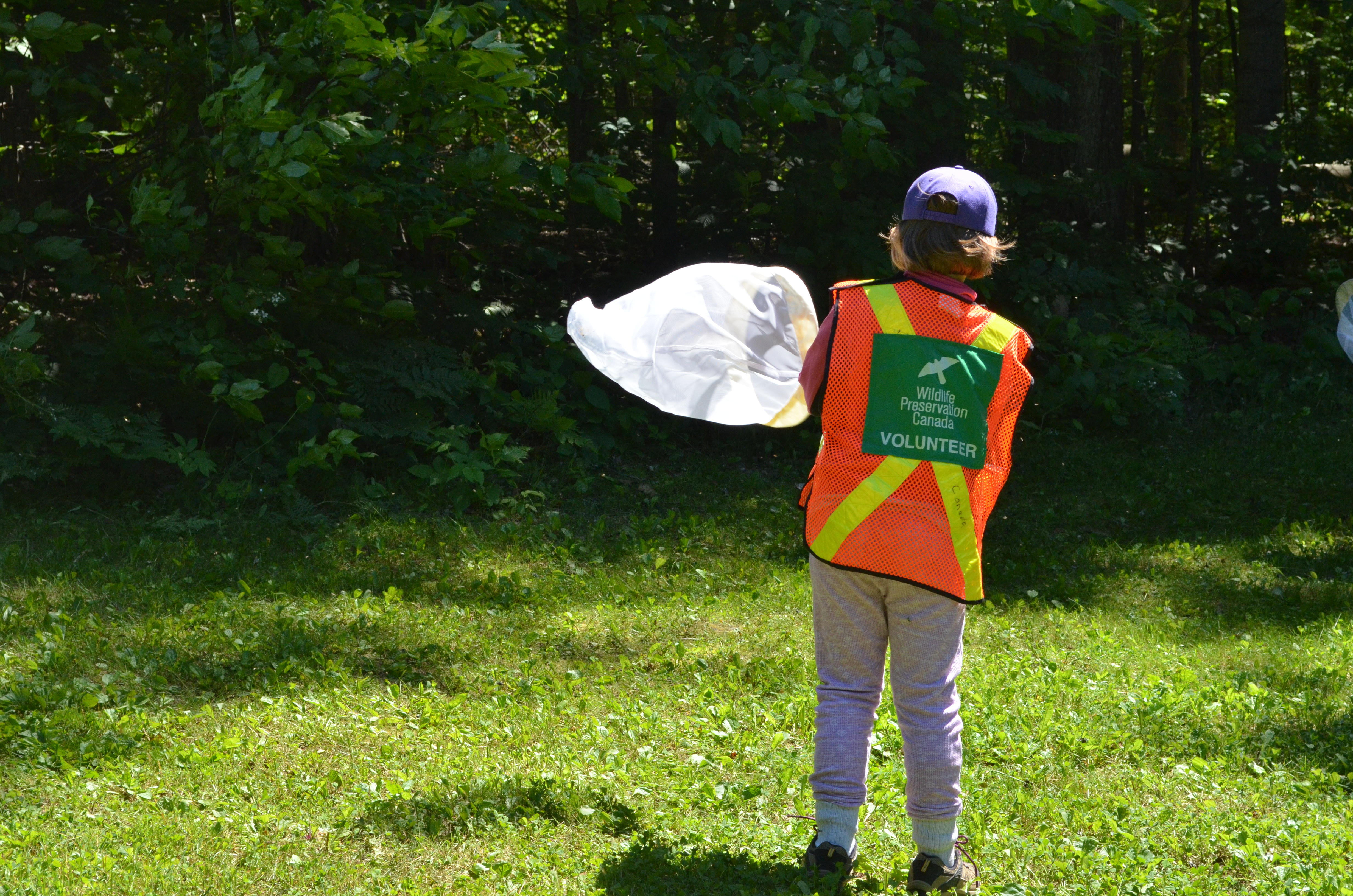 A kid with an orange reflective vest with a large green patch on the back that says Volunteer - Wildlife Preservation Canada swings a net to catch a bumble bee in a grassy area surrounded by trees.