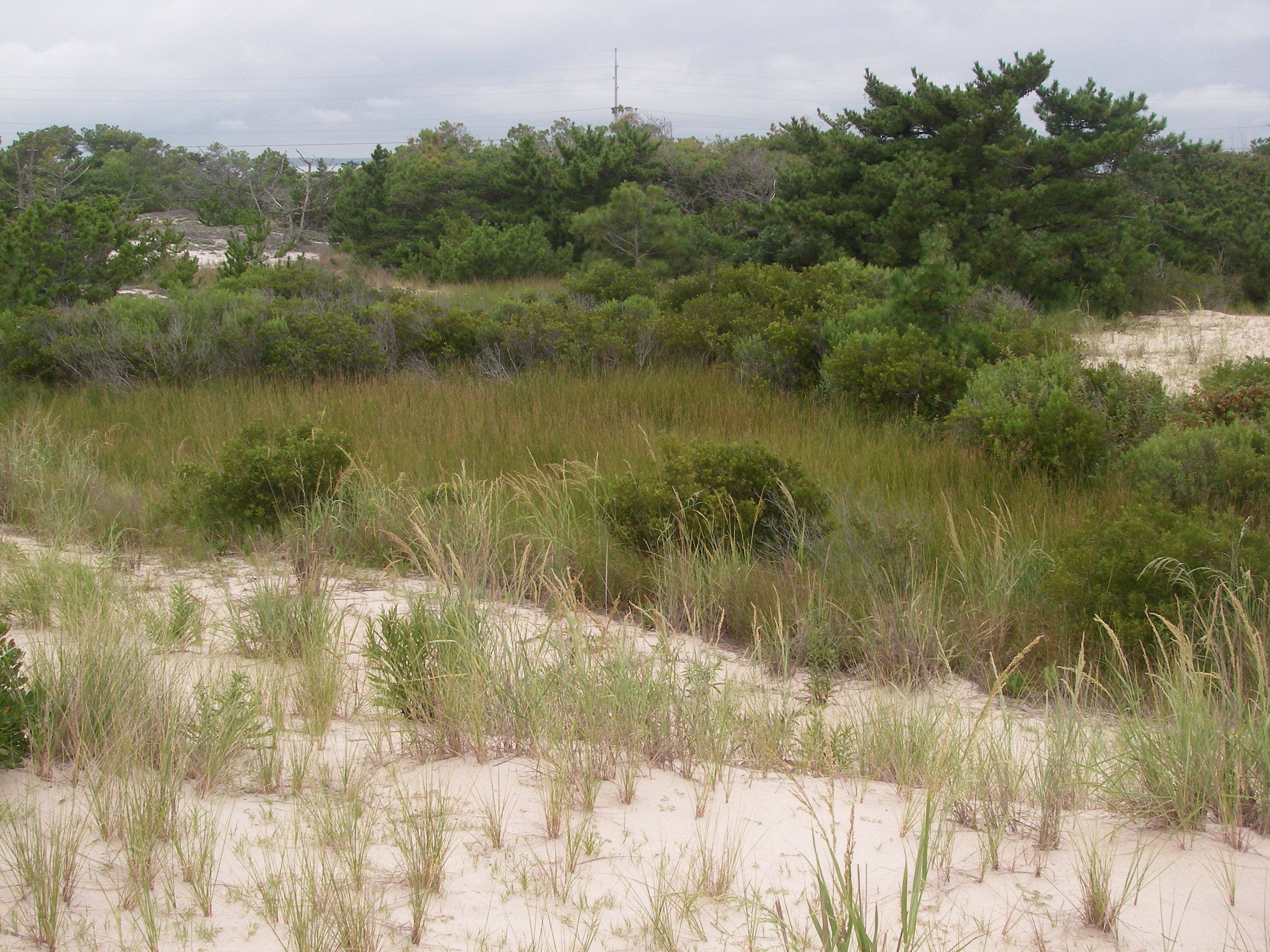 Sand, shrubs, and beach grass pepper this landscape of gentle inclines and dips.
