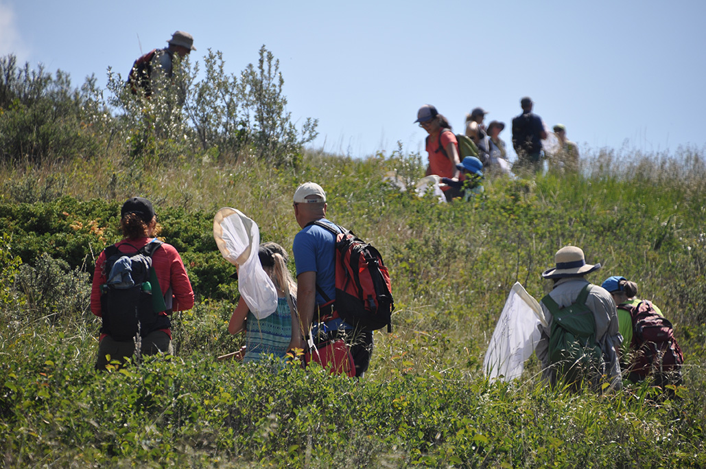 People scattered around a hillside carry nets and look toward the ground.