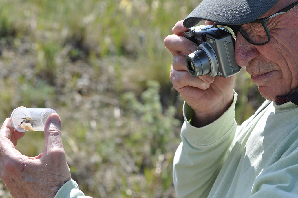 A person wearing a baseball cap looks through their camera lens to photograph a bumble bee they have caught.