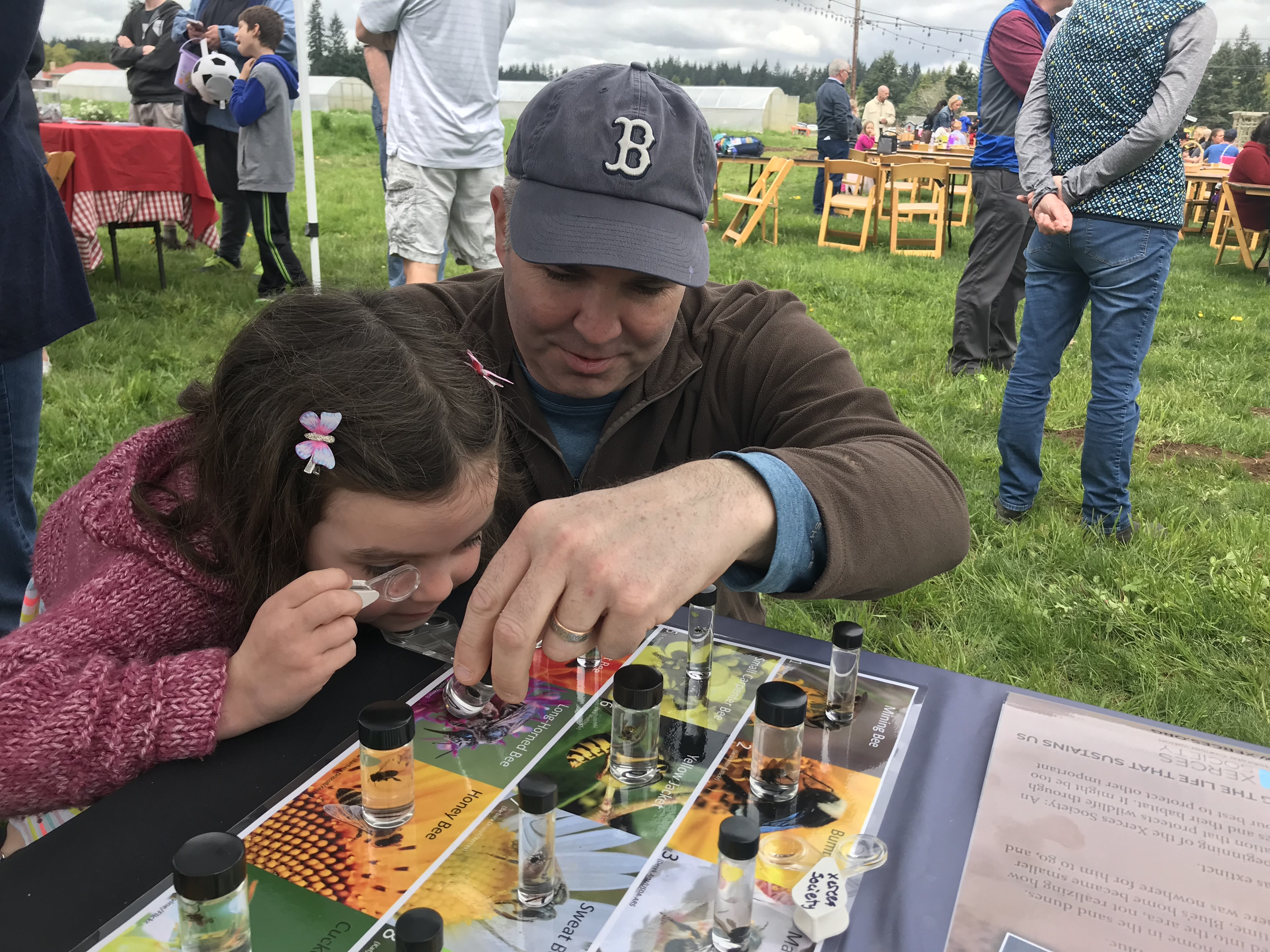 A man and a young girl peer at a series of glass vials containing bee specimens, atop a table adorned with brightly-colored photos of bee species.
