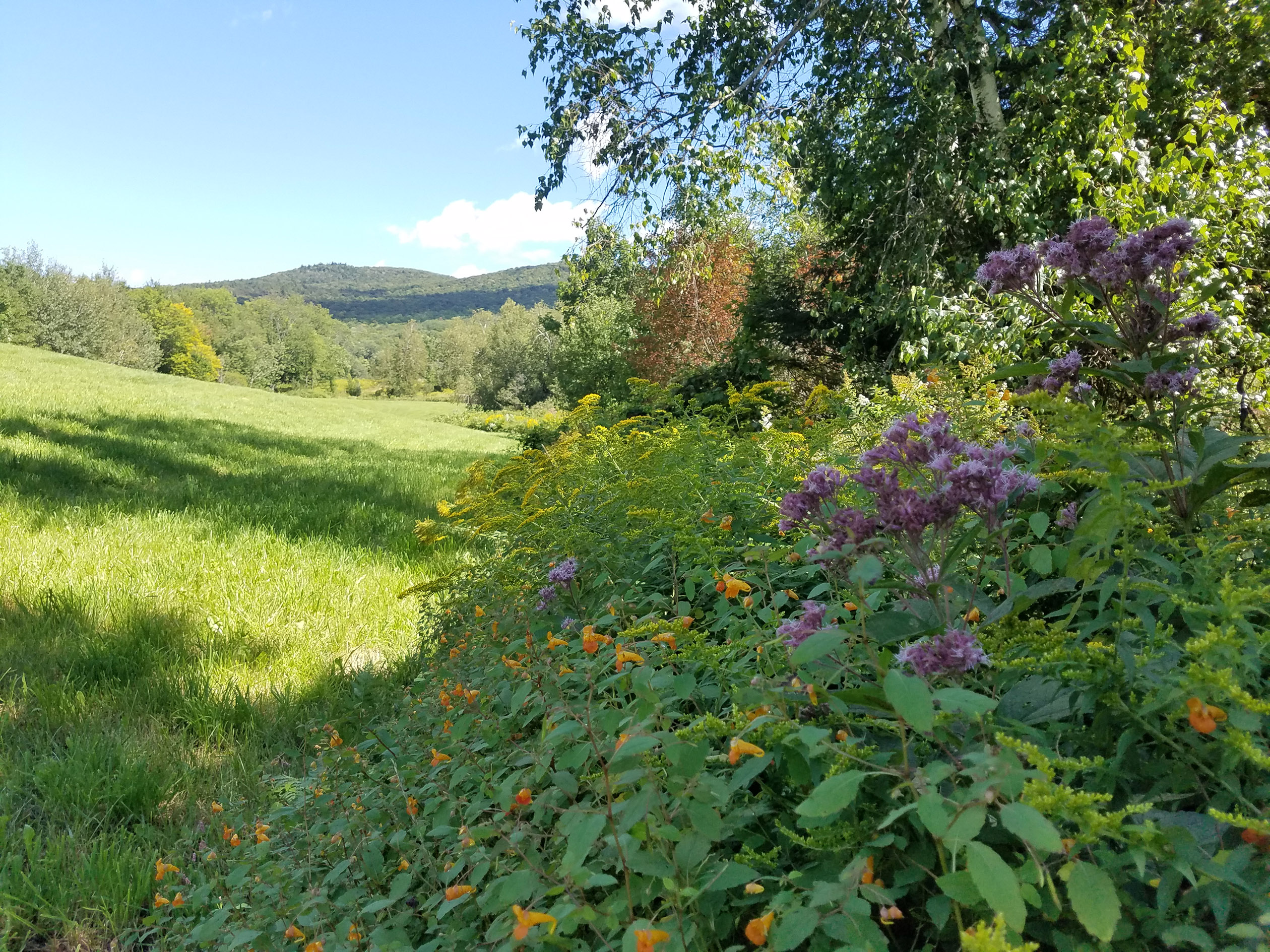 A landscape showing brightly colored wildflowers blooming along the edge of a hayfield, including orange jewelweed, purple joe pye weed, and yellow goldenrod