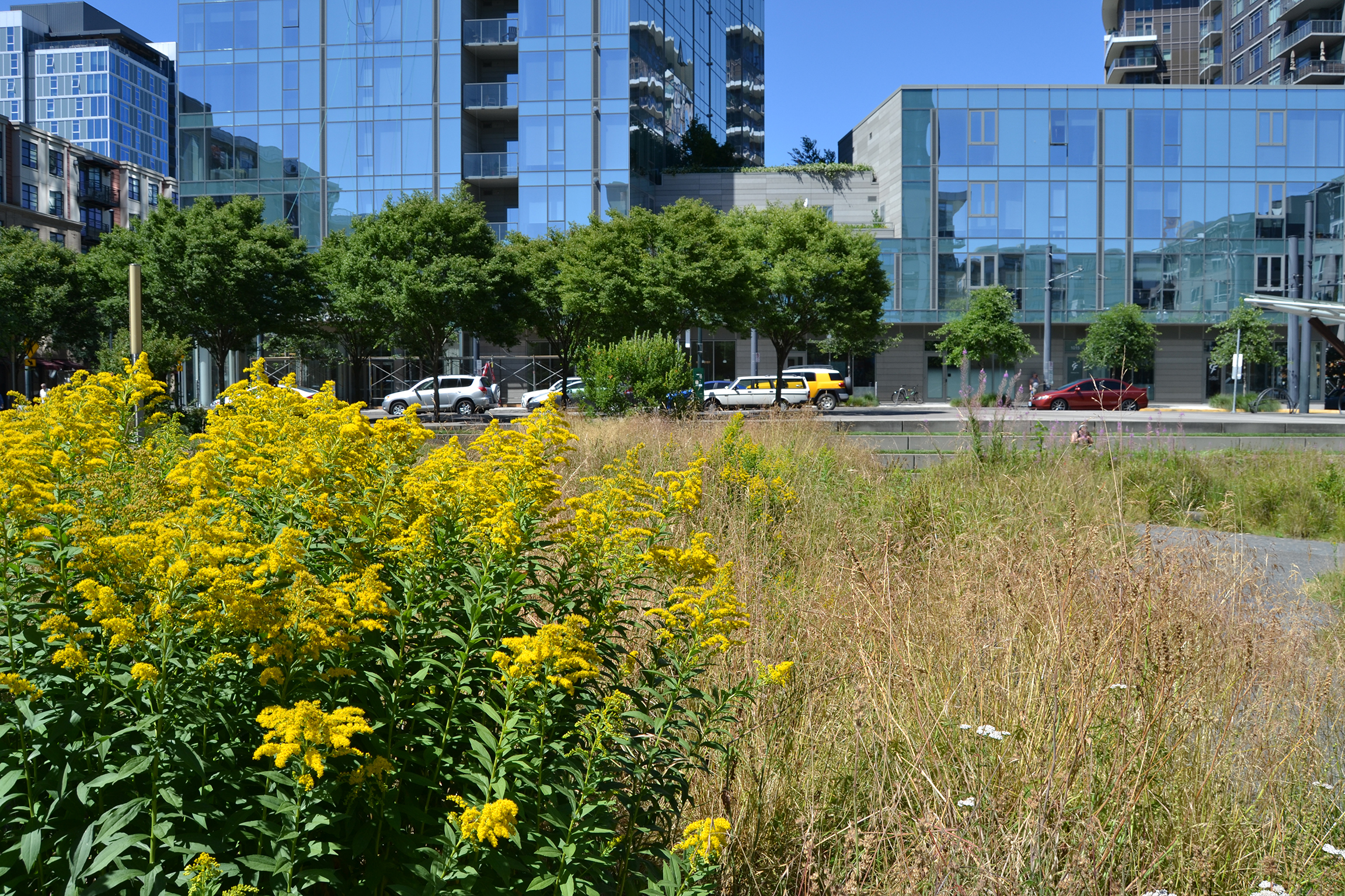 Native wildflowers bloom among office buildings