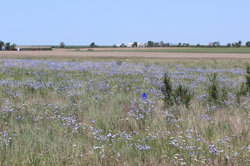 During the study, bees were trapped in crop fields and adjacent habitat areas, such as this grassland.