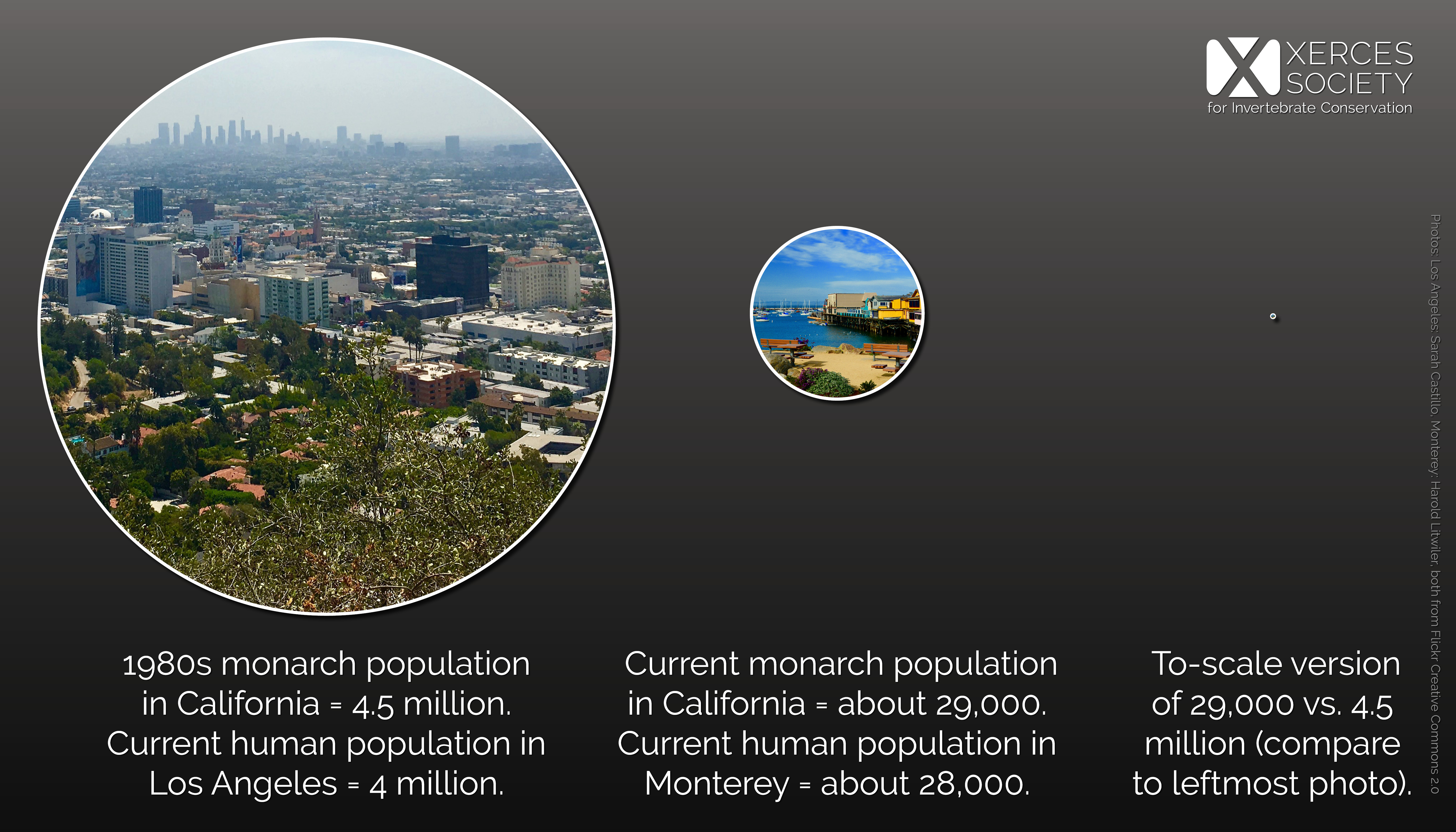 This infographic shows three circles, getting smaller as they progress from the left to the right. The leftmost circle contains an aerial photo of Los Angeles. The center circle, which is approximately half the size of the first, contains a photo of the Monterey waterfront. The rightmost circle is essentially a speck; it is 1/160th the size of the leftmost circle. This demonstrates the variation in population size from LA to Monterey, and draws the comparison between the size of the western monarch population in the 1980s and its size today.