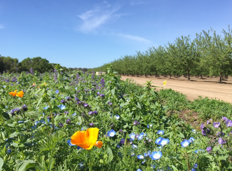 almond orchard habitat