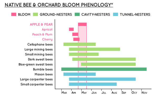 bloom time graph