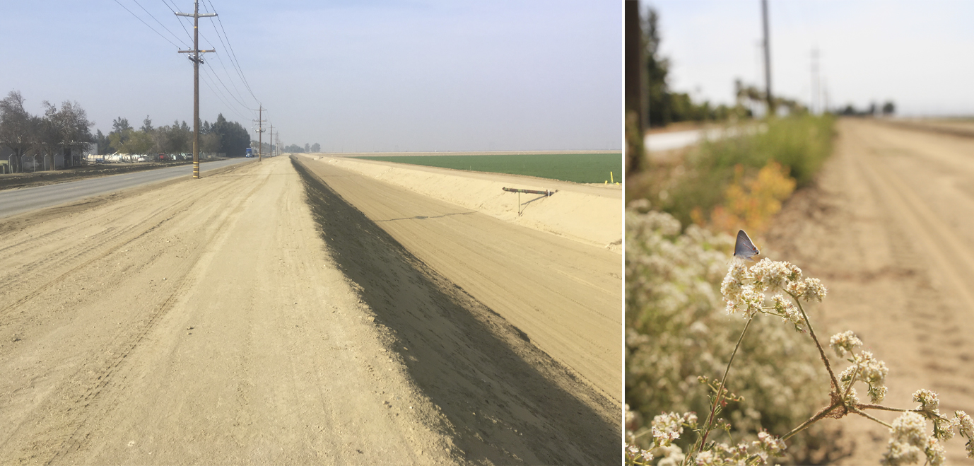 This is a two-part image. On the left is a dry, arid, agricultural landscape with a lot of bare dirt. On the right is the same landscape, but with a flowering hedgerow that recedes into the distance, and a small, gray butterfly perched on a small, thin branch with flowers in the foreground.