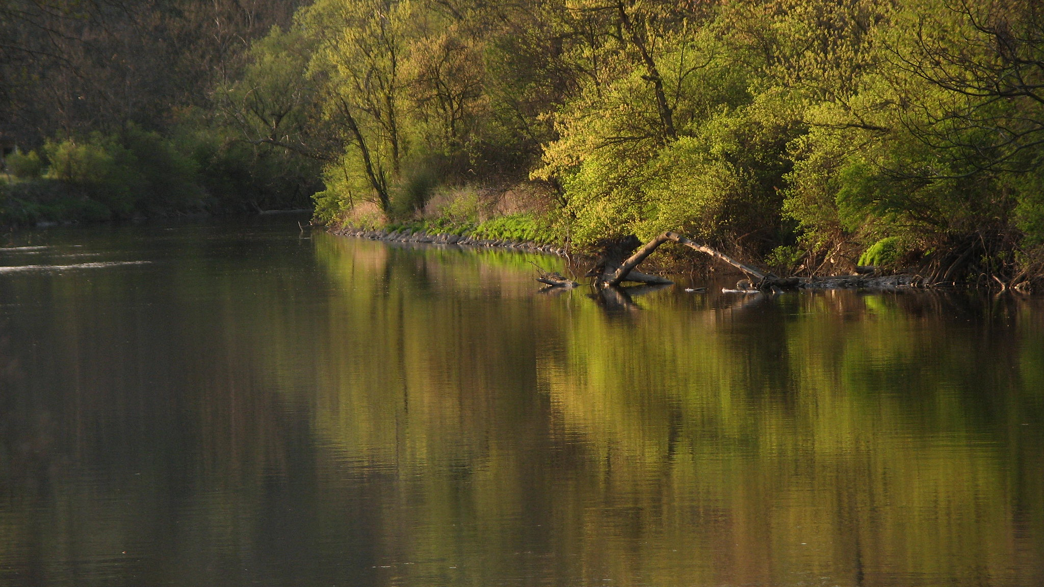 A river with still water reflects the green trees that line one of its banks, all under golden light.