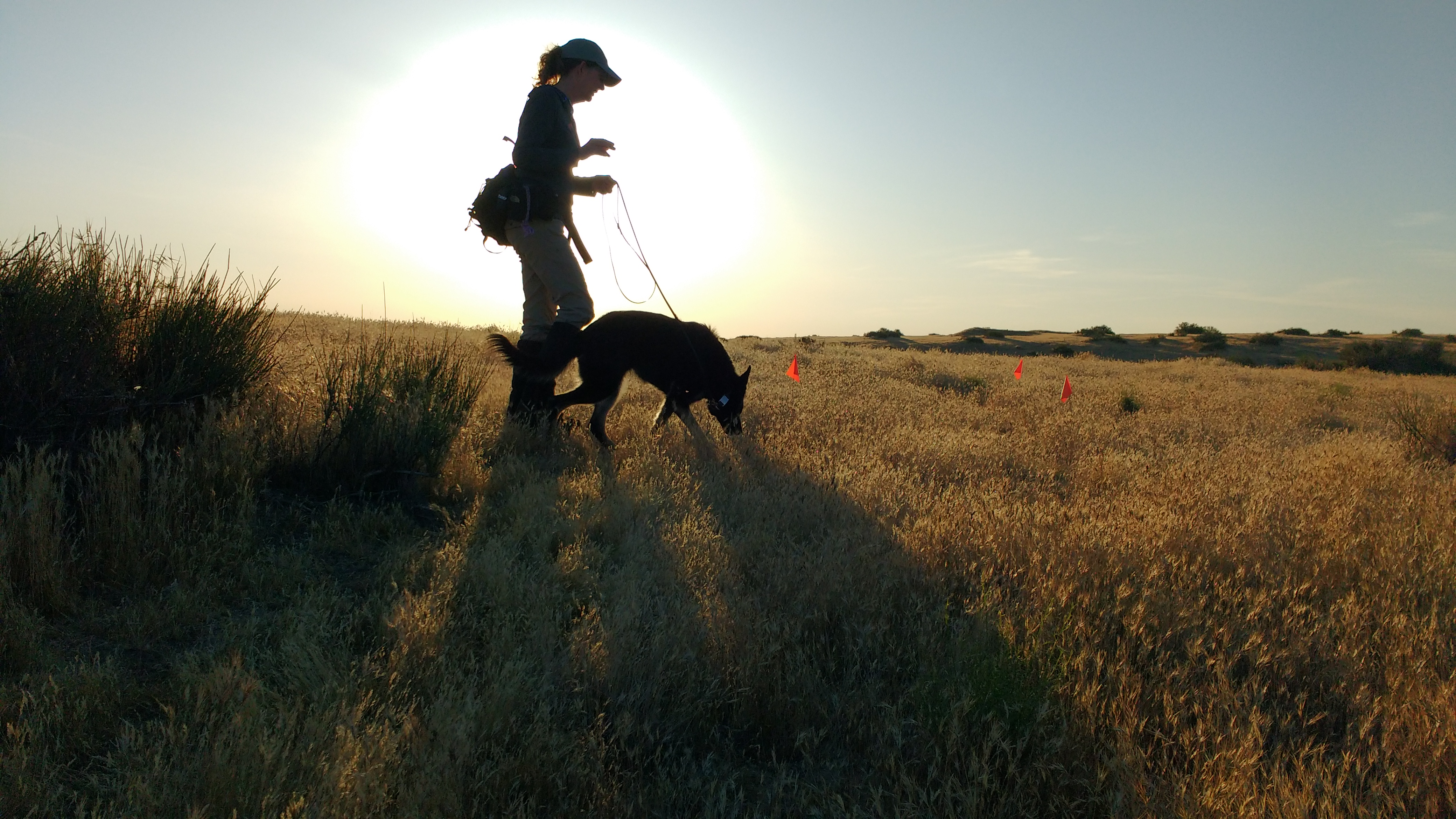 A woman walking nose sniffing dog across a field.