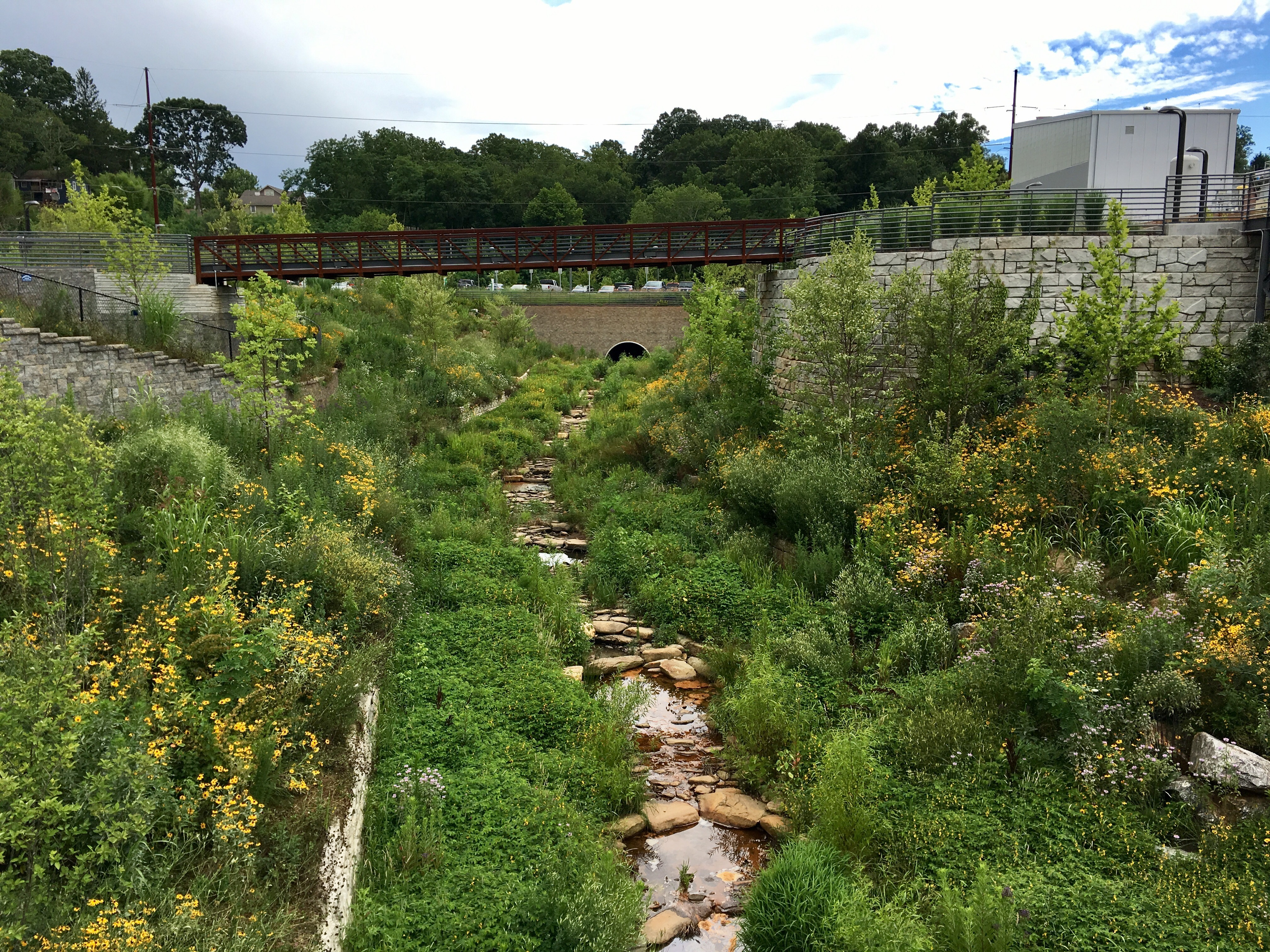 Lush pollinator habitat created on a brownfield site in Asheville, North Carolina, by the New Belgium brewery.