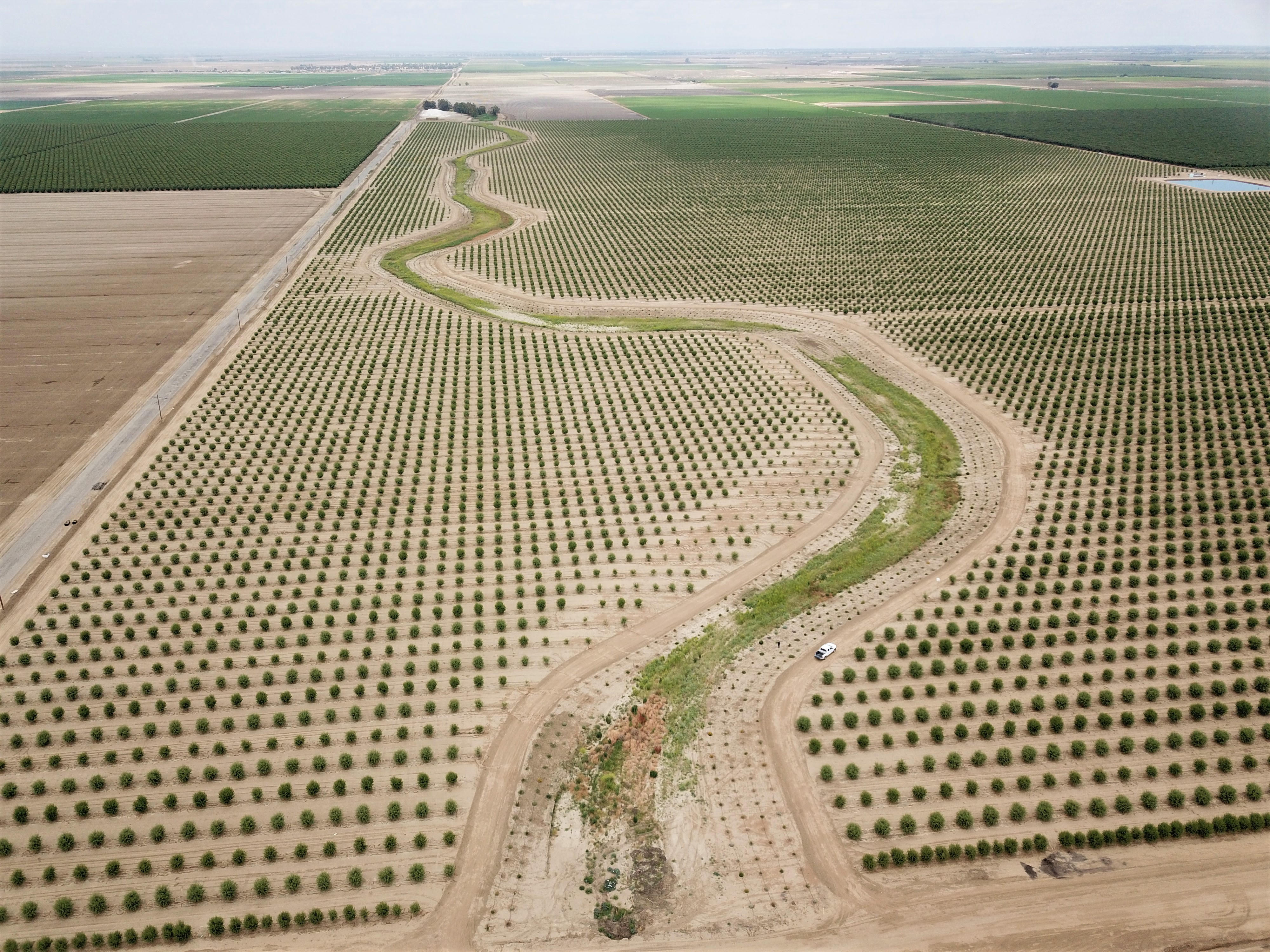 A landscape-scale aerial photo of California's Central Valley with pollinator meadows and hedgerows among sparse almond fields.
