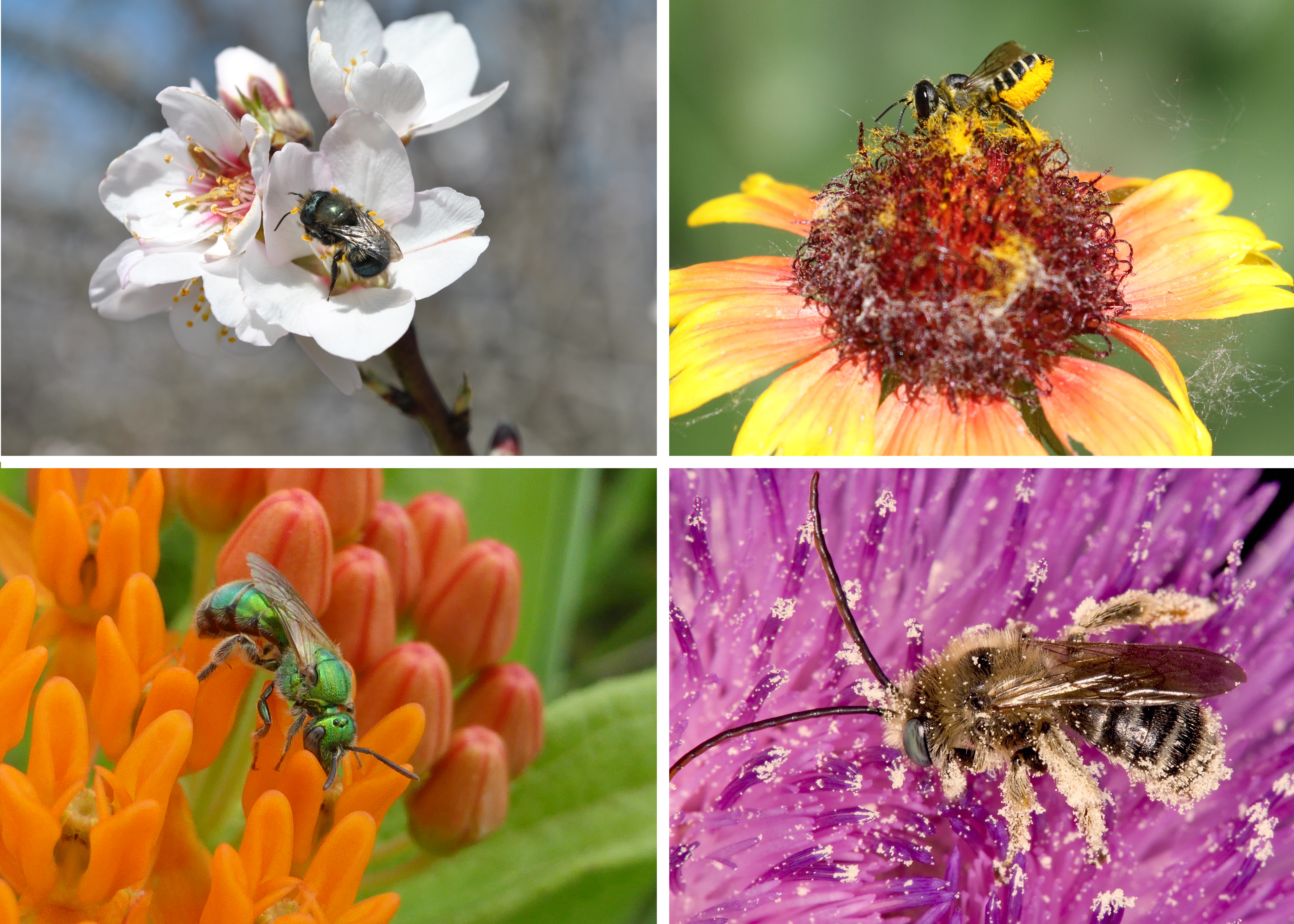 Brightly colored images of a diversity of bee species are shown in this grid.