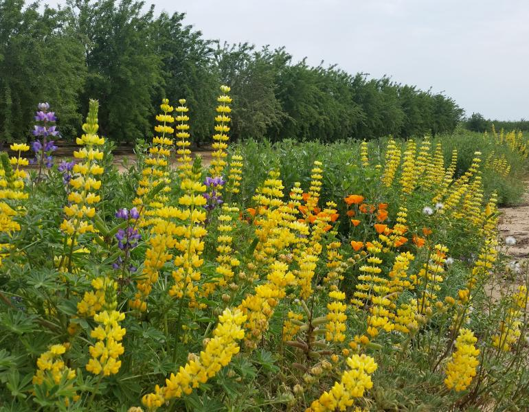 Brightly colored pollinator plants burst from a vibrant hedgerow running alongside an orchard.